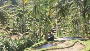 Half Day Tour Ubud