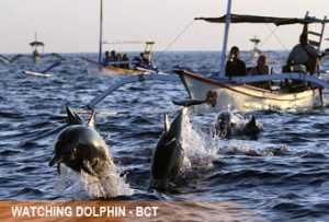 watching-dolphin4