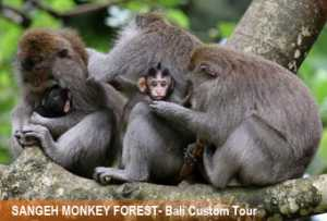 sangeh-monkey-forest-2