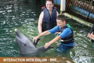 interaction-dolphin1