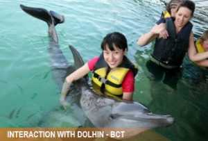 interaction-dolphin2