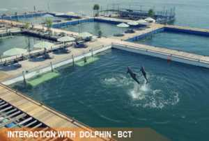 interaction-dolphin3