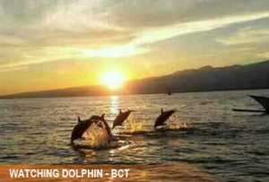 watching-dolphin1