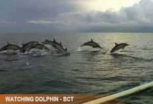 watching-dolphin3