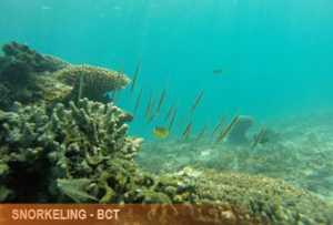snorkeling-padangbai2